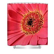 Pink Daisy Shower Curtain
