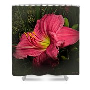 Pink Day Lily Shower Curtain
