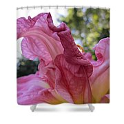 Pink Daylily Petal Shower Curtain