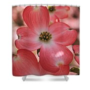 Pink Dogwood At Easter 2 Shower Curtain