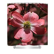 Pink Dogwood At Easter 3 Shower Curtain