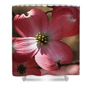 Pink Dogwood At Easter 4 Shower Curtain