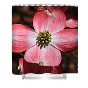 Pink Dogwood At Easter 5 Shower Curtain