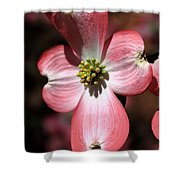 The Cross Of Christ Pink Dogwood At Easter 7 Shower Curtain