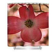 Crown Of Thorns Pink Dogwood At Easter 8 Shower Curtain
