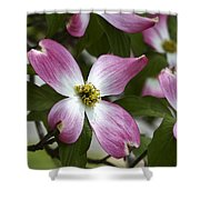 Pink Dogwood Blossom Up Close Shower Curtain