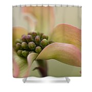 Pink Dogwood Macro Shower Curtain