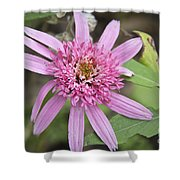 Pink Double Delight Echinacea Shower Curtain