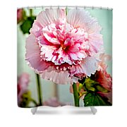 Pink Double Hollyhock Shower Curtain by Robert Bales