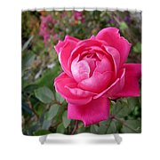 Pink Double Rose Shower Curtain