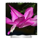 Pink Easter Cactus Shower Curtain
