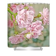 Pink Fairy Roses Shower Curtain by Jennie Marie Schell