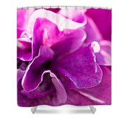 Pink - Featured 3 Shower Curtain