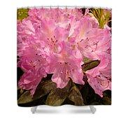 Pink Fiesta Shower Curtain