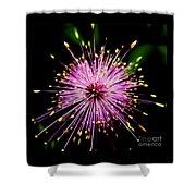 Pink Fireworks  Shower Curtain