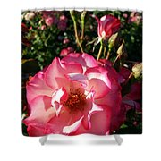 Pink Flaminco Rose 2 Shower Curtain