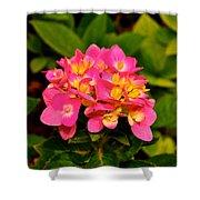 Pink Flower Austin Shower Curtain