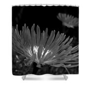 Pink Flower-bw Shower Curtain