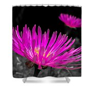 Pink Flower In A Green Grass - Splash Shower Curtain