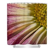 Pink Flower Macro Shower Curtain
