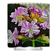 Pink Flower On Brier Island In Digby Neck-ns Shower Curtain