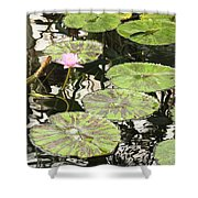 One Pink Water Lily With Lily Pads Shower Curtain