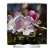Pink Flowering Crabapple Blossoms Shower Curtain