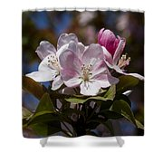 Pink Flowering Crabapple - Malus Shower Curtain