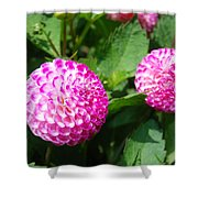 Pink Flowers Shower Curtain