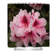 Pink Flowers In Spring Shower Curtain