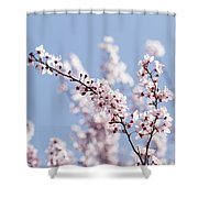 Pink For Girls   Blue For Boys Shower Curtain