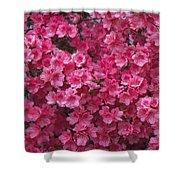 Pink Full Frame Azalea Blossoms Shower Curtain