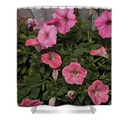 Pink Gathering Shower Curtain