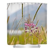 Pink Gem - Fire Weed Wildflower In Grand Teton National Park - Wyoming Shower Curtain