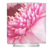 Pink Gerber Daisy Shower Curtain
