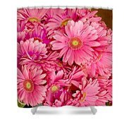 Pink Gerbera Daisies Shower Curtain