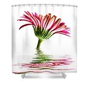 Pink Gerbera Flood 2 Shower Curtain