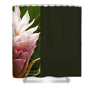 Pink Ginger Plant Shower Curtain