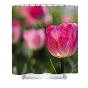 Pink Glowing Tulip Shower Curtain