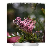 Pink Grevillea Shower Curtain