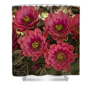 Pink Hedgehog Cactus Flowers  Shower Curtain