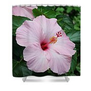Pink Hibiscus #3 Shower Curtain