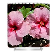 Pink Hibiscus Blooms Shower Curtain