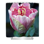Pink Hibiscus Flower Bud Shower Curtain