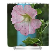 Pink Hollyhock And Rain Shower Curtain