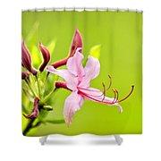 Pink Honeysuckle Flowers Shower Curtain