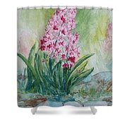 Pink Hyacint Shower Curtain