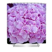 Pink Hydrangea Shower Curtain