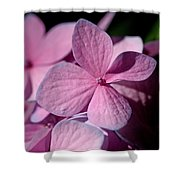 Pink Hydrangea Shower Curtain by Rona Black