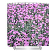 Pink Incarnated Shower Curtain